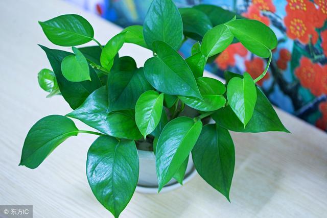 种绿植也能防潮除湿?养好这几种植物不用再怕梅雨天