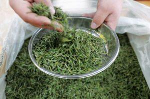 春茶储存,除湿机作用大