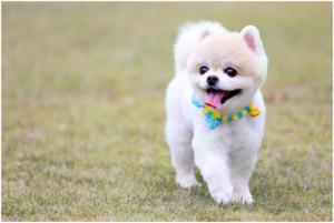梅雨季狗狗皮肤病防治,你又知道多少?