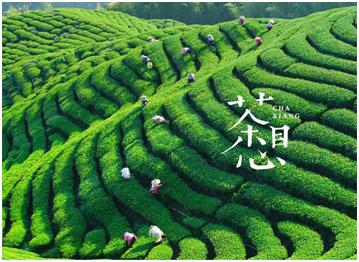 除湿机在茶叶行业中的应用