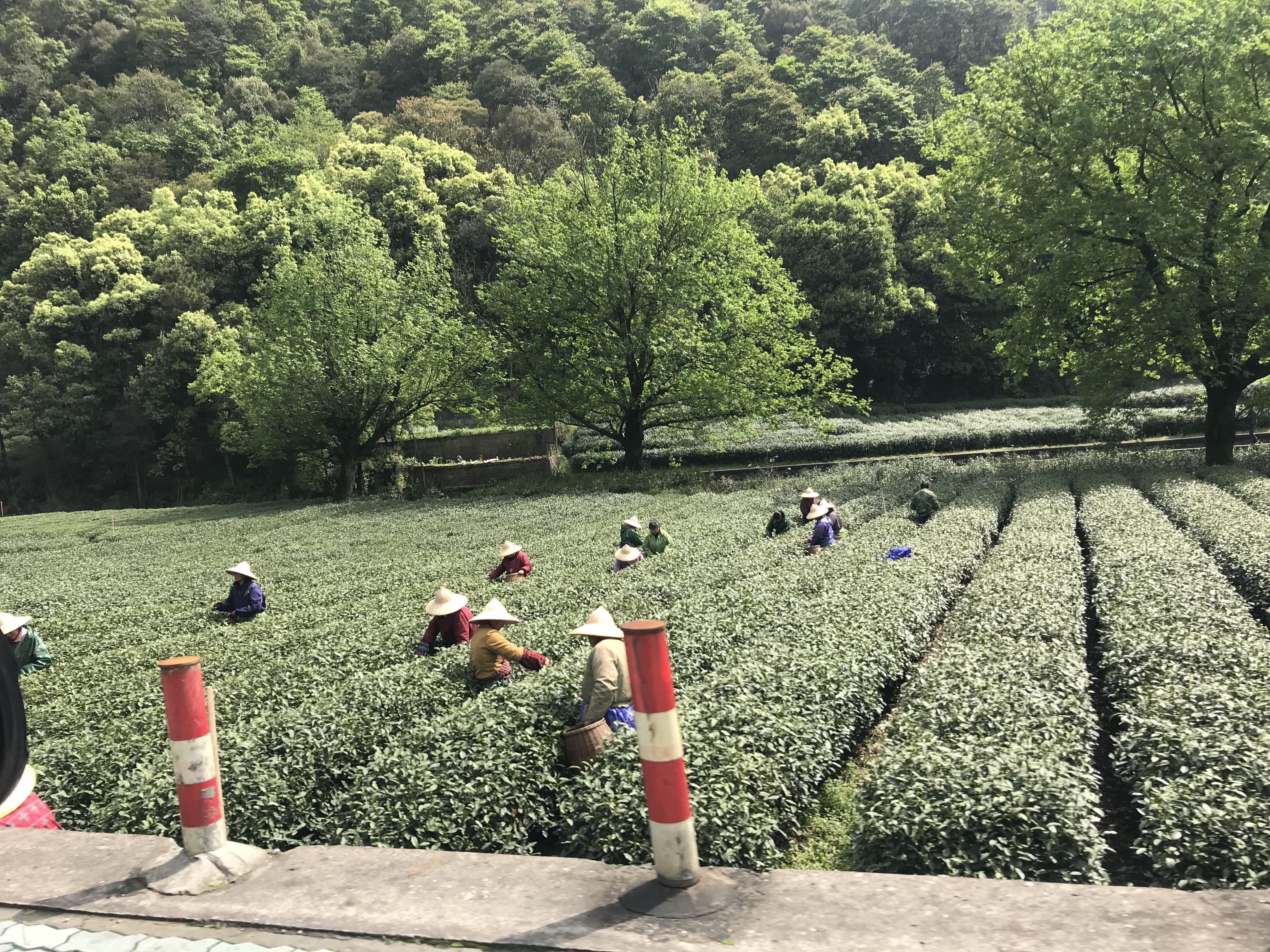 茶叶防潮,德业来守护